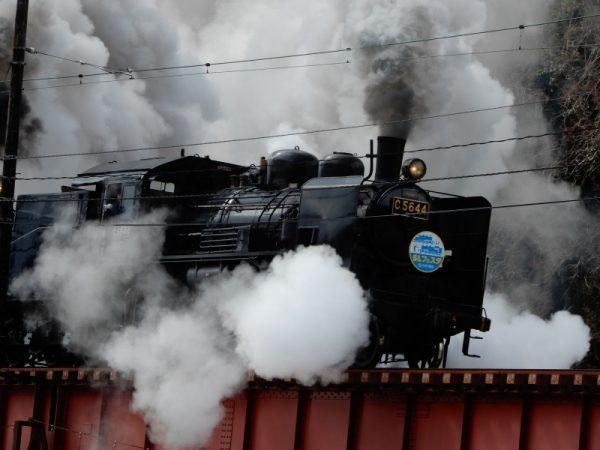 川根温泉で河津桜とSLフェスタのSL重連運転の雄姿を見る