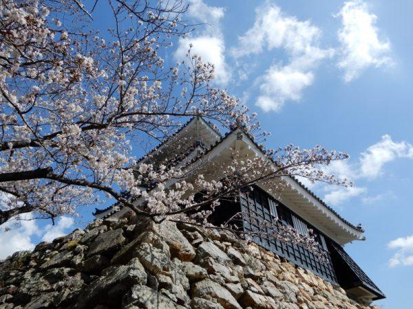 浜松城公園の桜(浜松市)