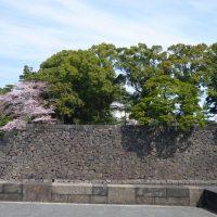はなさんぽ通信「皇居乾通り一般公開の桜を見る」