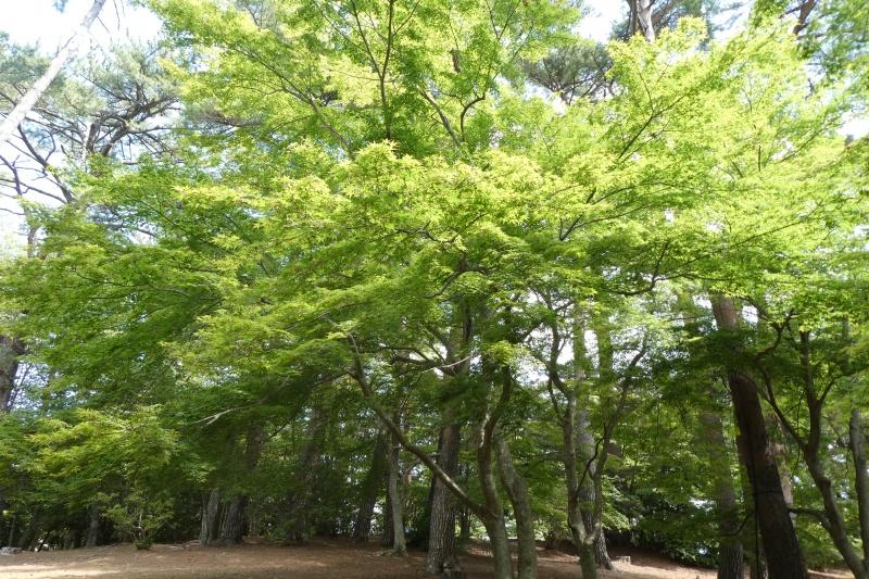 修善寺自然公園もみじ林 新緑から深緑へ(伊豆市)