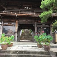 はなさんぽ通信「臨済寺の蓮の花」