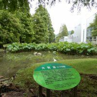 サッポロビール静岡工場ビオトープ園の蓮の花と樹木(焼津市)