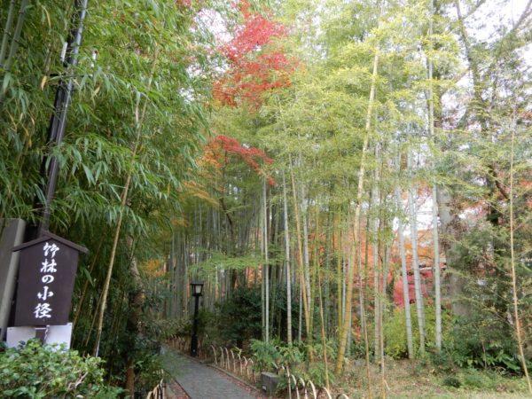 竹林の小径の紅葉(伊豆市)