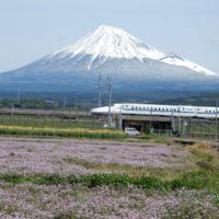 富士市内東部富士岡・浮島のれんげ畑(富士市)