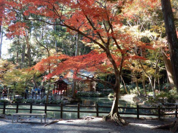 小國神社の紅葉(森町)