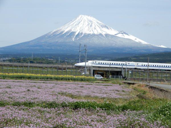 はなさんぽ通信「富士市で園児が田んぼにレンゲの種まき」