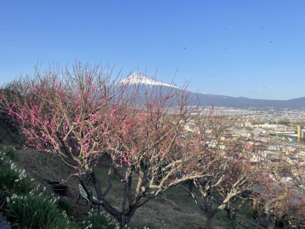宗清寺の梅・富士川梅園(富士市)