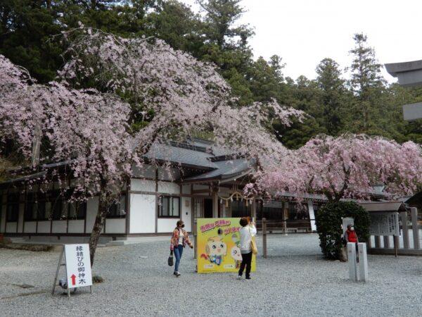 小國神社の桜(森町)