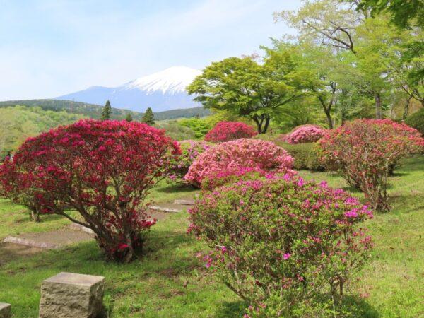 冨士霊園の新緑とツツジ(小山町)