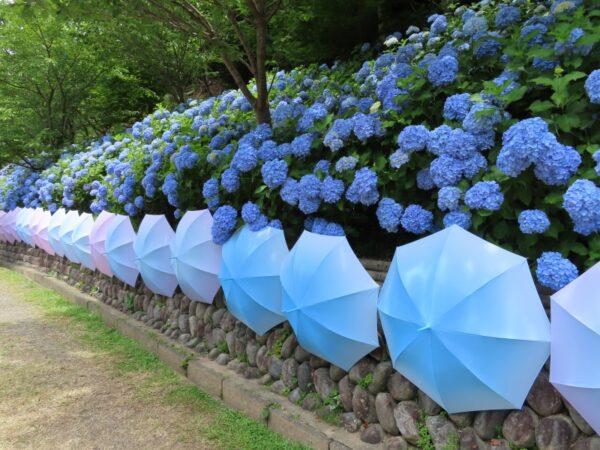法多山の紫陽花と風鈴(袋井市)